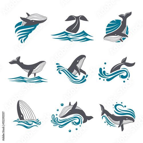 Naklejka premium Wieloryb wśród fal morskich i plamy wektor zestaw ikon