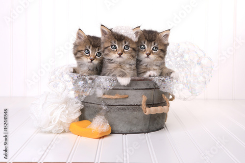 Valokuva Cute Kittens in Washtub Getting Groomed By Bubble Bath