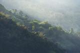Natura widok tropikalny las, Khao Yai park narodowy, Tajlandia, rocznika filtra wizerunek - 152465320
