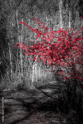 Staande foto Rood, zwart, wit Purple Tree