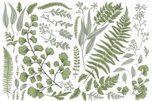 Set With Leaves And Ferns.