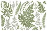 Set of fern leaves. - 152541517