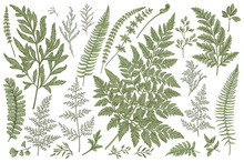 Set Of Fern Leaves.