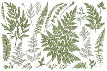 Set Of Fern Leaves.