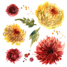 Watercolor Hand Painted Red And Yellow Chrysanthemums. Invitation. Wedding Card. Birthday Card. Autumn Design Element