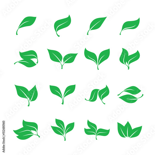 Fototapety, obrazy: Set green leaves isolated from the background. Vector simple leaves tree.