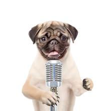 Dog Holds Retro Microphone . Isolated On White Background