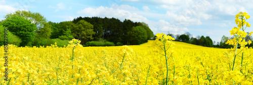 Photo sur Toile Jaune Rapsfeld - Panorama