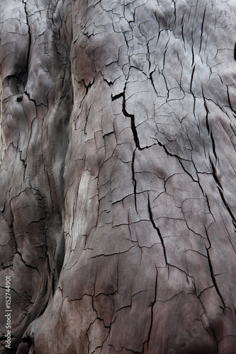 Foto auf Leinwand Texturen Kauri wood