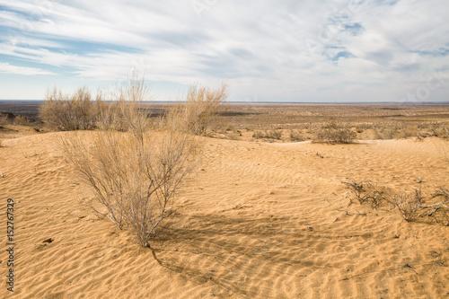 Photo Kyzylkum Desert