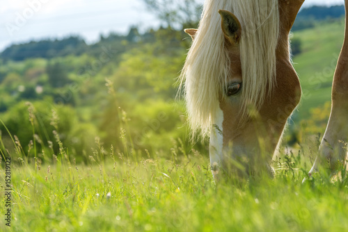In de dag Paardrijden Horse grazing in a pasture with grass