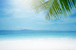 Blurred beach background with palm tree.