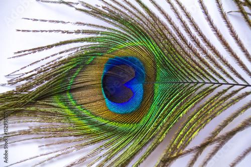 Foto op Plexiglas Pauw peacock feathers