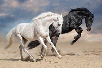 Czarno-białe konie biegną w pustynnym kurzu