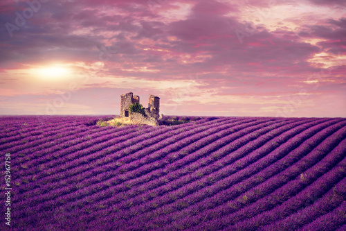 Spoed Foto op Canvas Violet Lavender field at sunset