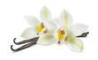 Leinwanddruck Bild - Double vanilla flower pods isolated on white