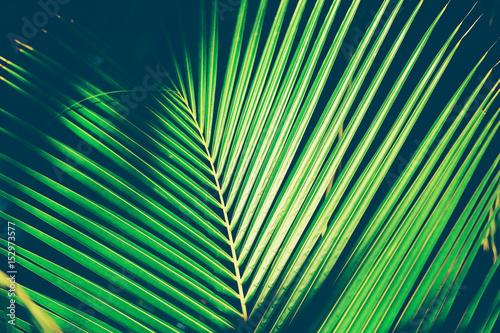 egzotyczny-lisc-palmowy-zblizenie