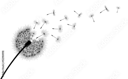 Fotografie, Obraz  Abstract background with silhouette dandelion flower and seeds, vector illustration