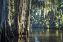 Misty Morning Swamp Bayou Scen...