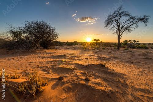Türaufkleber Afrika Sonnenuntergangs-Stimmung in der Kalahari