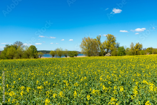 Foto op Canvas Pistache Landscape with canola fields in spring, bright and clear light, spring. In the Background the lake Woblitz, Mecklenburg, Germany