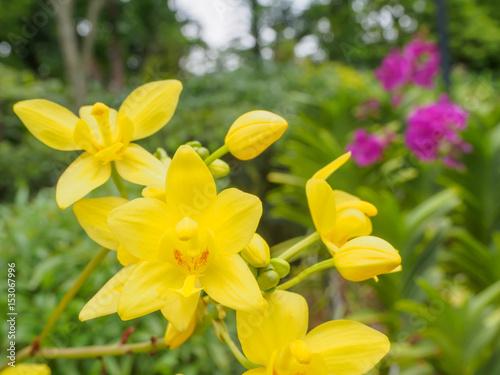 Fotobehang Bloemen Orchid flower and green leaves background in garden.