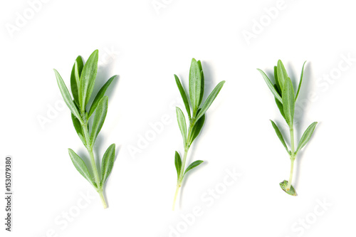 Sprig of fresh thyme isolated on a white background Fototapete