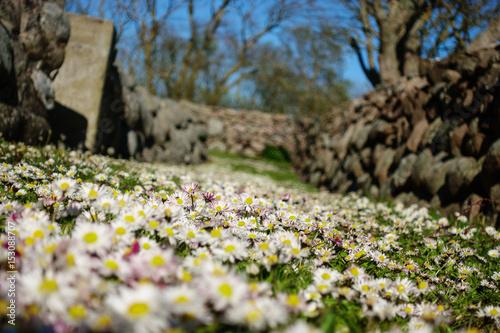 beautiful summer day on the nature reserve island of hirsholmene Billede på lærred