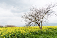 Early Spring Landscape. Yellow Blooming Flowers And Lonely Tree Without Leaves On A Grey Rainy Sky Background
