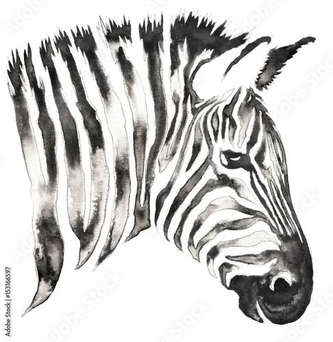 czarno-bialy-monochromatyczny-obraz-z-wody-i-atrament-rysowac-ilustracji-zebra