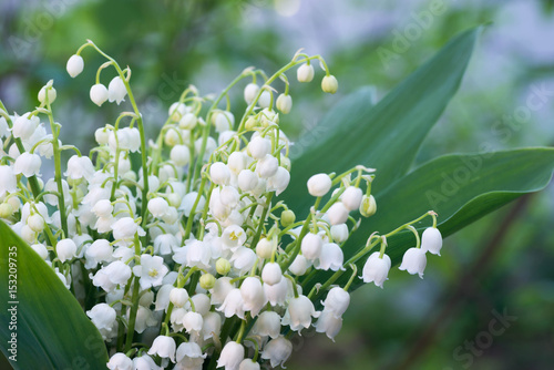 In de dag Lelietje van dalen lily of the valley flowers