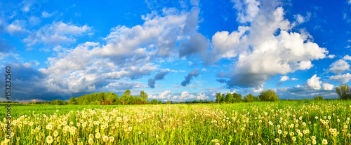 Dandelions on spring meadow - 153232560