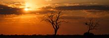 Sunset - Chobe N.P. Botswana, ...