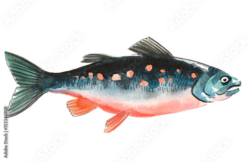 Watercolor salmon fish Canvas Print