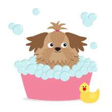 Little Glamour Tan Shih Tzu Dog Taking A Bubble Bath. Yellow Duck Bird Toy. Cute Cartoon Baby Character. Flat Design. White Background.