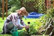 Sadzenie ziół na grządce. Kobieta sadzi rośliny w przydomowym ogródku