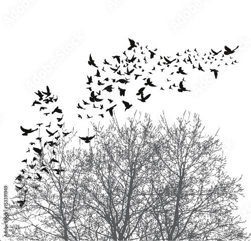sylwetka-latajace-ptaki-ilustracji