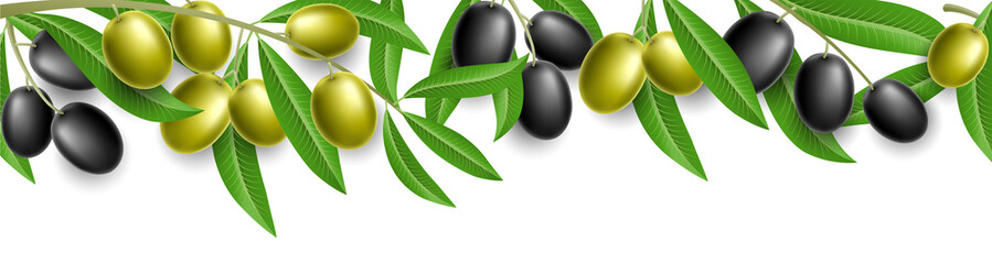Panel Szklany Do kuchni Olive plant banner with green and black olive and leaves, isolated on white. Vector illustration.