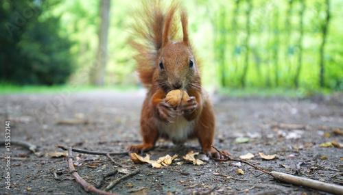 Staande foto Eekhoorn Eichhörnchen im Park