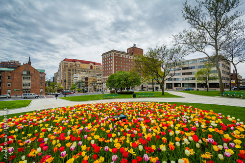 Fényképezés  Tulips and buildings in Albany, New York.