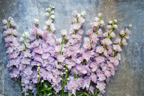 Tablou Canvas Varietal lilac delphinium. Top view