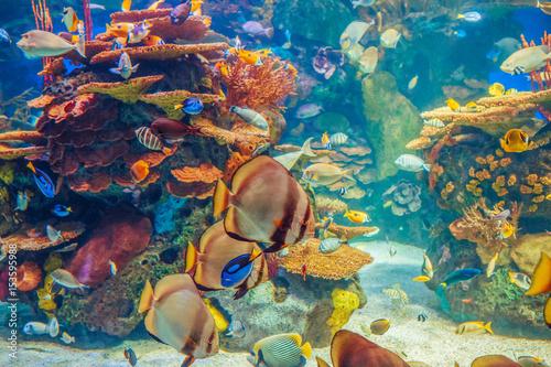 podwodny-swiat-kolorowe-ryby-z-czerwonymi-koralowcami