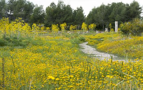 Fotobehang Zwavel geel Ancient ruins of Salamis, Cyprus