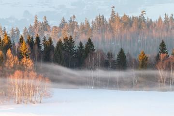 Fototapeta Inspiracje na zimę Las oświetlony promieniami zachodzącego słońca