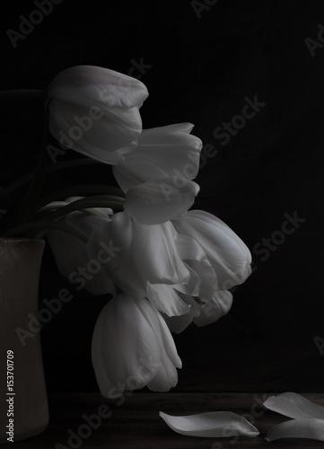 Valokuva  White tulips in a vase