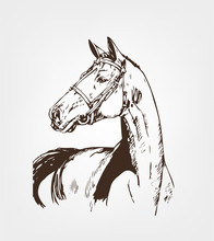 Horse's Head. Hand Drawn Vector Illustration. Hand Sketch Horse