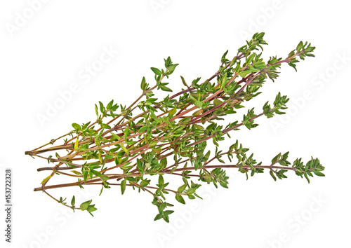 Fotografía  Sprig of thyme isolated on a white background