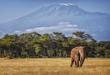 Fototapeta Mountains - Kilimanjaro and Elephant