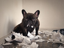 Blame The Dog Made A Mess In T...