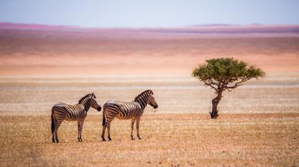 Fototapeta na wymiar Lonely in the desert